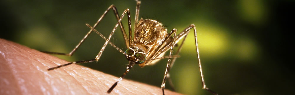 West Nile season underway - protect yourself